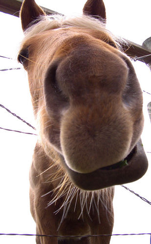 Horses can get relief from flies, mosquitoes, and horse flies - as well as their riders.